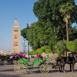 City Trek Marrakech