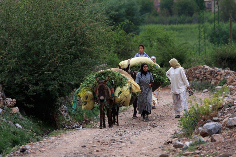 immersion-au-coeur-des-sources-de-lourika-marrakech-maroc-7