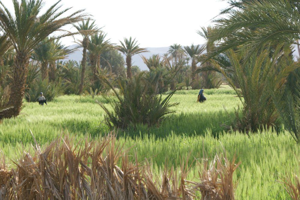 Rando Chamelière dans la vallée du Draa