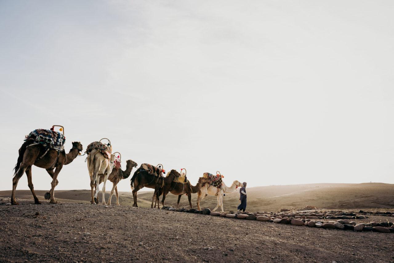 Balade dromadaire Medina Desert - Sophie Masiewicz Photographe