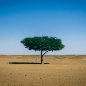 Sahara autrement Destination Evasion